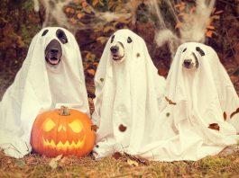 Cum se sarbatoreste Halloween in Germania