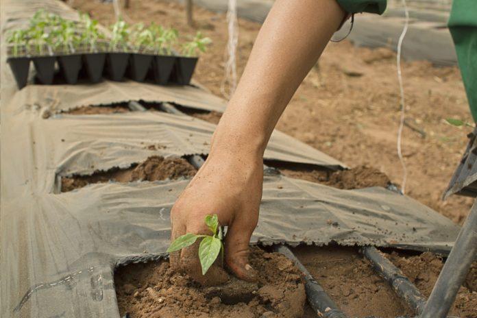 Sunt locuri de muncă în Spania, în agricultură FOTO: yassineexo/Pixabay.com